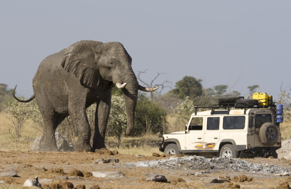 4x4 car near a big African Elephant in Botswana.